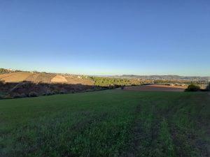 The soil of Manfredi gallery